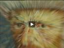 Van Gogh - Holanda