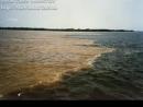 Bioma: Amazônia