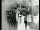 Capoeira - Mestre Bimba e Mestre Pastinha