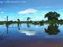 Devastação do Pantanal