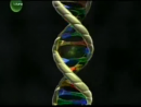 Evidências evolutivas - DNA