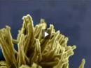 Nanoarte - Da Colmeia às Flores