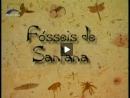 Fósseis de Santana - Parte 1