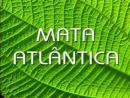 Mata Atlântica - Parte 1