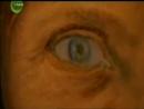 Evolução do Olho Humano