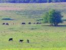 Reportagem sobre o bioma Pampas