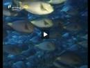 Peixes - Os Conquistadores da Água - Parte 2