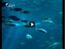 Peixes - Os Conquistadores da Água - Parte 3