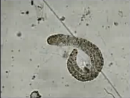 Os Organismos e suas Células