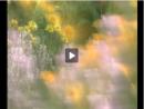 Botânica -  A vida reprodutiva das plantas - Parte 1