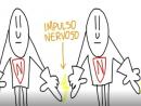 Função dos neurônios