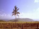 Rapa Nui - Uma aventura no paraíso - parte 4